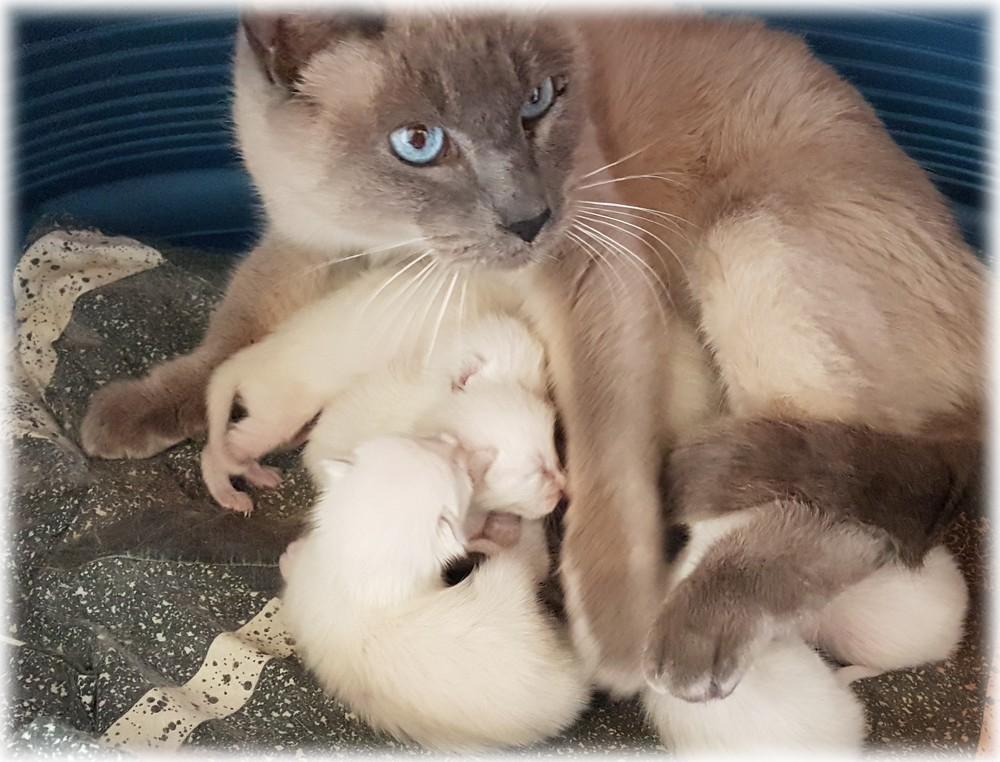 Jenny-bébés